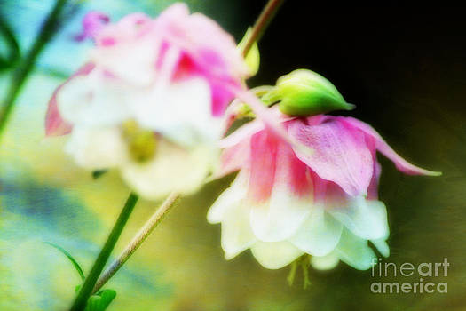 Blurred Beauties by Shirley  Taylor