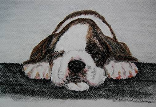 Boxer Pup by Joan Pye