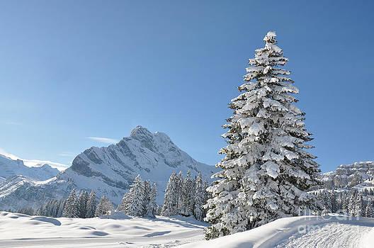 Braunwald Switzerland by Alexander Chaikin