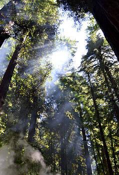 Matt Hanson - Breaking Through the Trees II