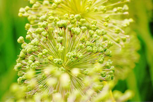 Budding Foliage by Shehan Wicks