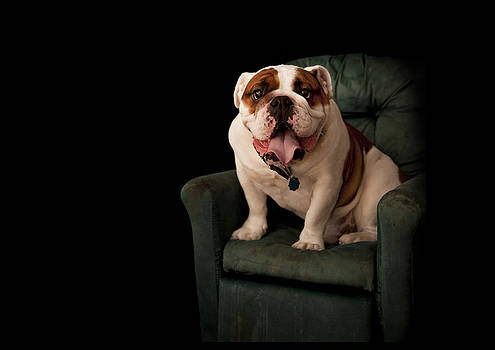 Bulldog2 by Thomas Kessler
