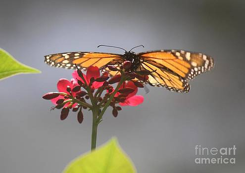 Butterfly at Rest by Theresa Willingham