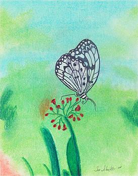 Butterfly by Susan Schmitz