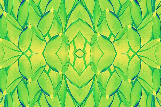 Cactus  by Jesus Nicolas Castanon