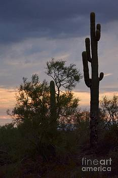 Cactus vantage by Patty Descalzi