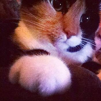 #catsofinstagram by Rachael Sansing