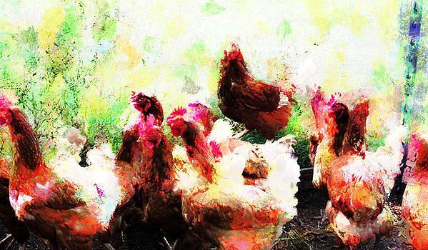Chickens by Scott Smith