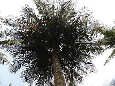 Coconut Tree by Priya Arun