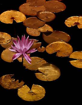 Copper Pennies by Jill Balsam