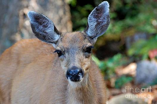 Deer by Marsha Thornton