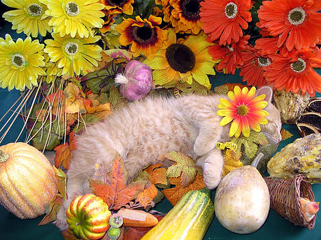 Chantal PhotoPix - Di Milo - Flower Child - Kitty Cat Kitten Sleeping in Fall Autumn Harvest