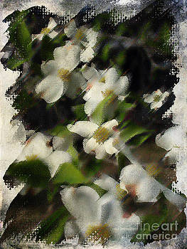 Dogwoods by Jim Wright