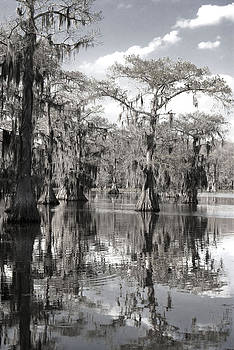 Down on the Bayou by Cindy Rubin