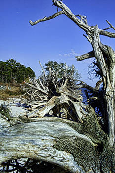 Driftwood by Frank Feliciano
