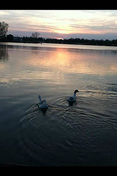 Duck Sunset by Emma Sechrest