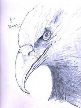 Eagle by Poornima M