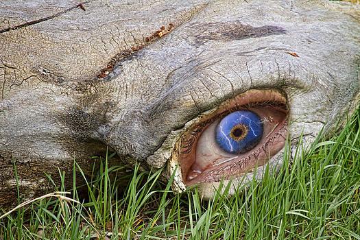 James BO  Insogna - Eye of a Dinosaur Lightning