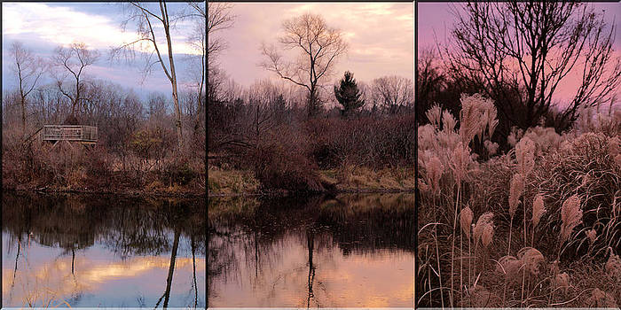 Fading Light by Christy Woods