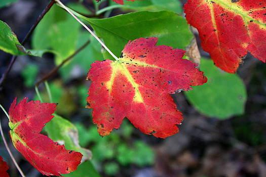 Anne Babineau - fall color