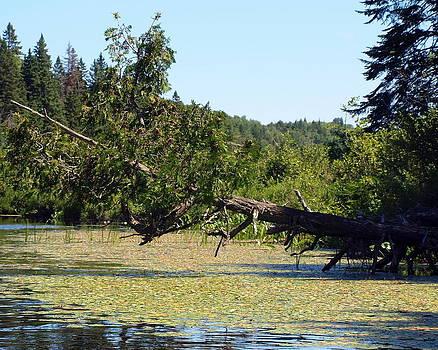 Fallen Tree by Kristal Kobold