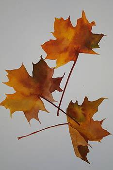Falling leaves of Autumn II by Jan Lowe