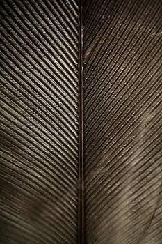 Feather by Daniel Kulinski