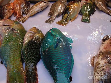 Fish Market by Lam Lam