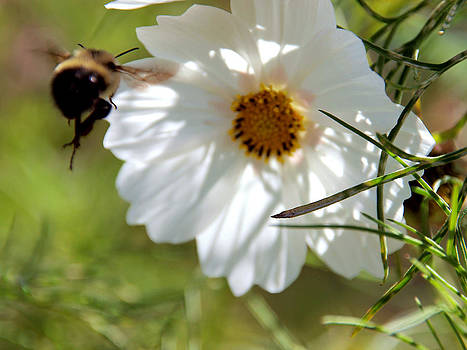 Flower and Bee by Christy Woods