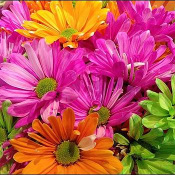 #flower #daisy by Shari Malin
