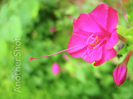Flower II by Dawn Elmore