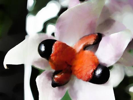 Nato  Gomes - Flower