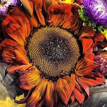 #flower #sunflower by Shari Malin