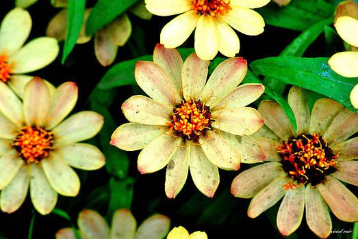 Flowers by Vinod Nair