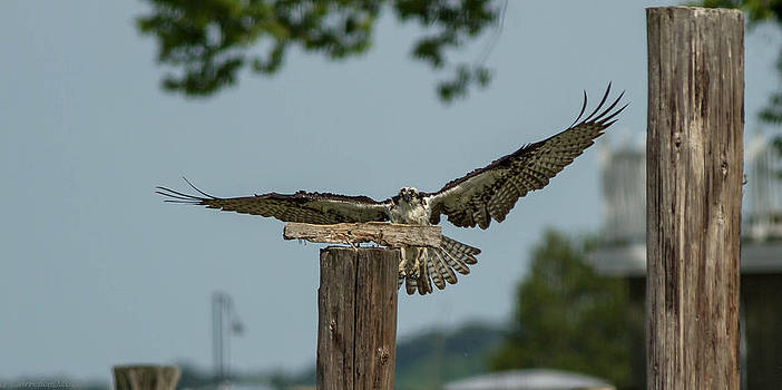 Fly By  by Glenn Lawrence
