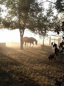 Foggy Morning by Judith Angell Meyer