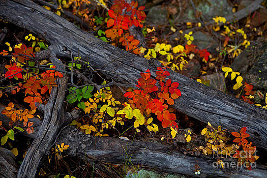 Forest Floor by Barbara Schultheis