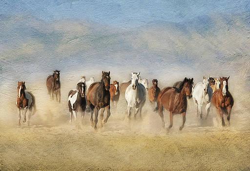 Freedom by Judy Neill