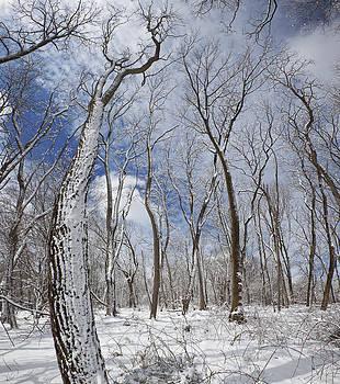 Fresh Snowfall by Phil Degginger