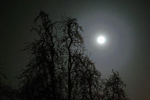 Full Moon by Erik Tanghe