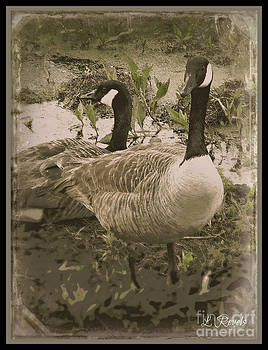 Geese by Leslie Revels