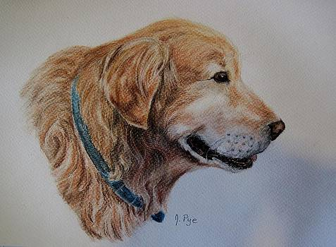 Golden Retriever by Joan Pye