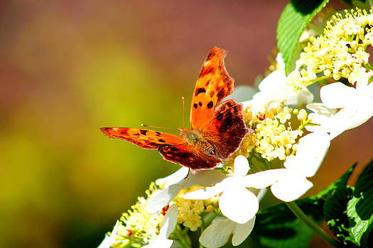 Graceful Butterfly by Jose Lopez