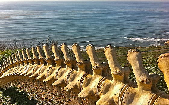 Gray Whale Vertebrae by Ruth Edward Anderson