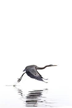 Jason Smith - Great Blue Heron