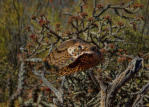 Great Horned Owl by Dan Nelson
