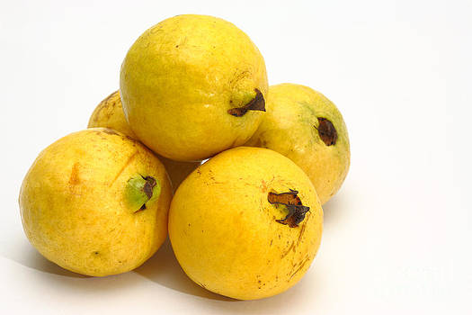 Gaspar Avila - Guava fruits