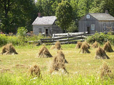 Peggy  McDonald - harvest time