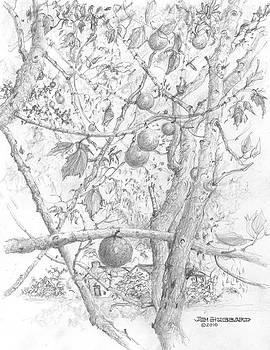 Jim Hubbard - Hawaii-Kukui Candlenut Tree