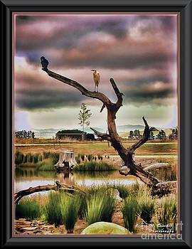 Hdr Wetlands by James  Dierker